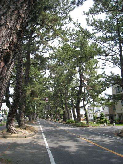 かきつばた咲く季節に池鯉鮒宿へ(東海道五十三次39番目④)