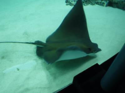 池袋のサンシャイン水族館に行って参りました