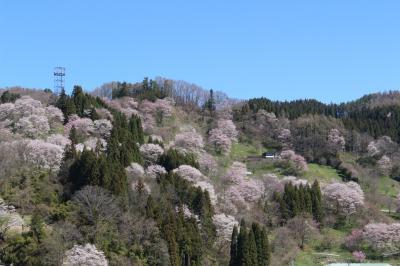 日本で最も美しい村、小川村・二反田の桜を見に行ってみました。帰りに妙義山さくらの里も。