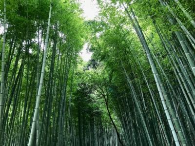 嵐山散策。──「天龍寺」と「常寂光寺」(福井・滋賀・京都の旅 その6)