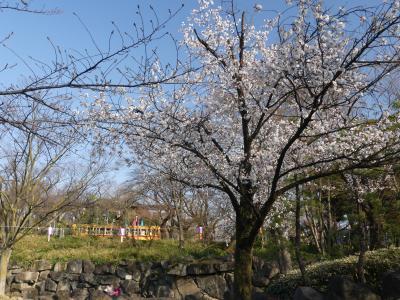 「飛鳥山公園」のサクラ_2019_3月26日は3分咲きくらいでしたが、賑わっていました。(東京都・北区)
