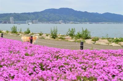 大津☆湖岸なぎさ公園 湖岸に映える芝桜にうっとり☆彡