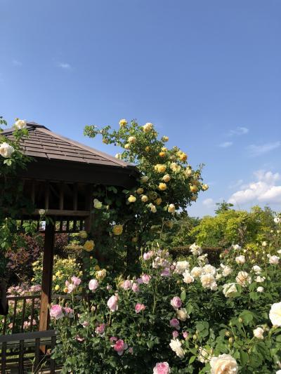 花日和の休日♪ ~バラの花菜ガーデン~