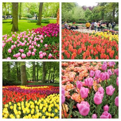 東回り世界一周(5) オランダのキューケンホフ公園&ライデン
