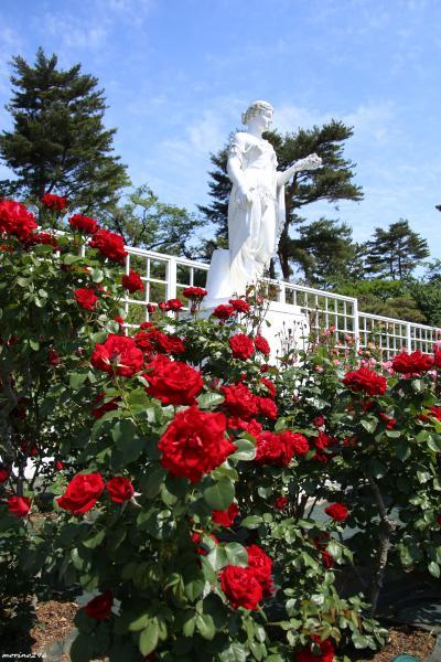 2019春バラの香りに包まれて(その3)@生田緑地バラ苑