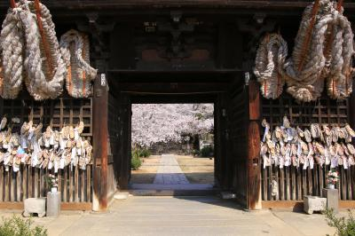 猫とウサギと桜三昧 春の尾道&大久野島の旅  (5)西國寺の桜 独り占め