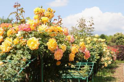 加奈ガーデン、バラが見頃です・・・