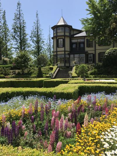 花を求めて⑩ バラが満開の異人館、港の見える丘公園、中華街ランチ