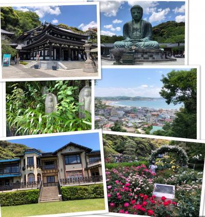 鎌倉散策、文学館のバラ園、由比ヶ浜が眺望できる長谷寺、新緑の中の大仏