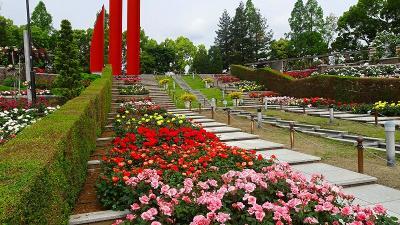 バラの花が咲き乱れる・・・荒牧バラ公園 下巻。
