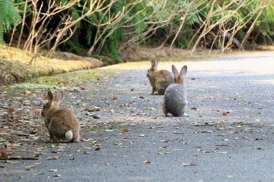 猫とウサギと桜三昧 春の尾道&大久野島の旅 (4)ウサギに癒された大久野島