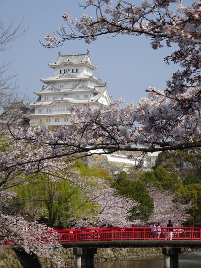 桜が満開の『姫路城』