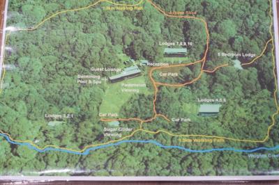 GW10連休!ケアンズ西部のアサートン高原で「探鳥どうでしょう。」第3話:墓地ではあの母子に、夜はハリーポッターのフクロウに遭遇!の巻