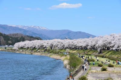 角館 桜まつりへ 【東北遠征3日目】