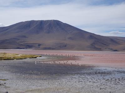 ボリビア旅行は高地トレーニング? 5日目・ウユニ南部巡り(マルクビラマール~オホ・デ・ペルディス)