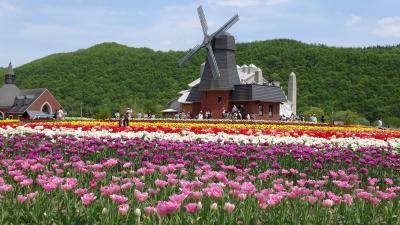 花の香り漂う かみゆうべつ チューリップフェア2019!! ~遠軽にもちょっと寄って芝桜も満喫(^。^)~