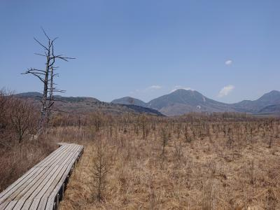 初夏の日光の旅2日目 戦場が原、小田代が原ハイキング