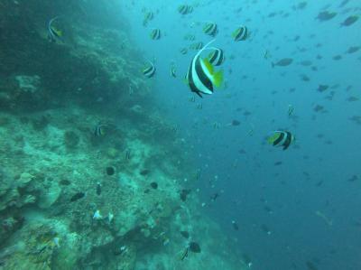 GW10連休!ブスアンガ島でジュゴンに会う旅。(5日目)アポリーフでダイビング