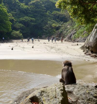 宮崎 海岸線の旅③ 都井岬・幸島 ~ときめく宿と猿の島に行く の巻~
