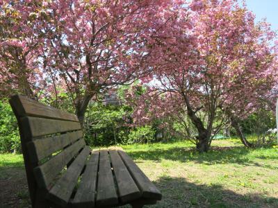 北海道も春が、きました゚+。:.゚(*゚Д゚*)゚.:。+゚平岡樹芸センター