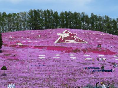 道東三大芝桜とチューリップ見学