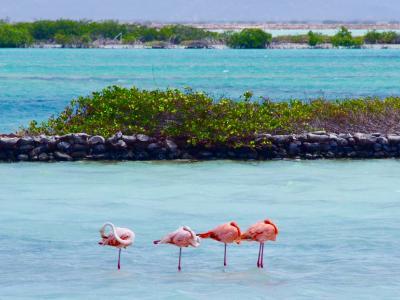 Coming soon! Bonaire