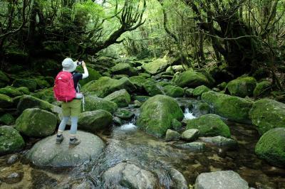 屋久島 植生の垂直分布を歩く 白谷雲水峡