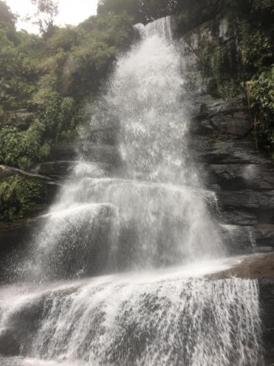 GW八重山の旅 ー ナーラ(仲良川)の滝とイリオモテヤマネコのUNCHI ー