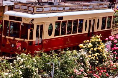 都電荒川線(東京さくらトラム)沿線に咲き広がる綺麗なバラの風景を探しに訪れてみた