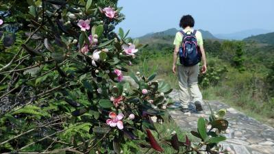 桃金娘が花盛りの5月、アンソニー・ウォン授賞作を。(1)