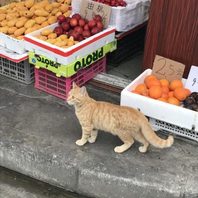 2019GW★改元を迎えた上海で食べる、飲む、買う、ひたすら歩く!