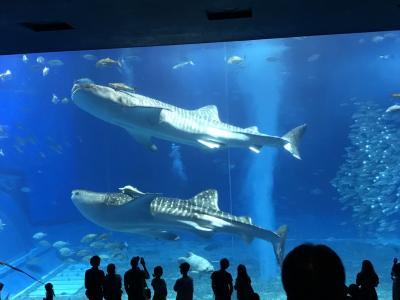 車なし沖縄旅行☆1日目 美ら海水族館・近そうでまだ遠いホテル日航アリビラ