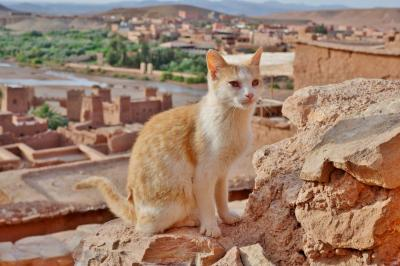 忘れられないモロッコの旅 9.ワルザザートからアイト・ベン・ハッドゥを経てマラケッシュへ