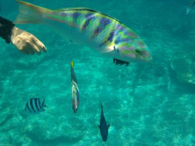 2019年5月 癒しを求めて沖縄♪お魚天国♪魚と戯れビーチとホテルステイを満喫するDay3♪