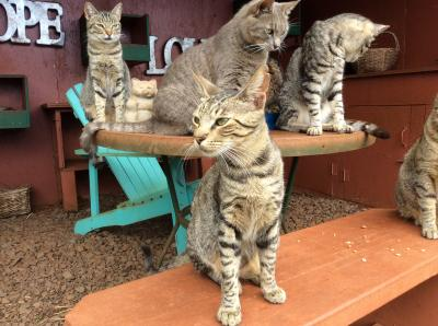 Lanai cat sanctuary 訪問記