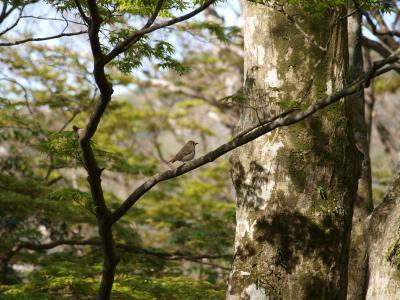 芦ノ湖湖畔のコテージと金時山。ひたすら飲んで食べたGW・3泊4日 vol1