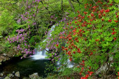 ◆新緑眩しい羽鳥湖高原/明神滝&立矢川の滝