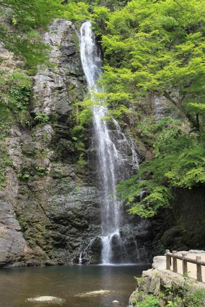 新緑の箕面の滝