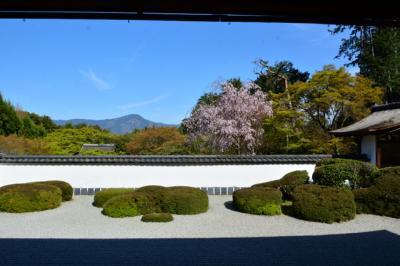 京都の桜 その五!2019年