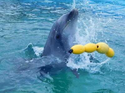 ジェットスターで行く室戸岬 イルカ様に遊ばれてきました♪