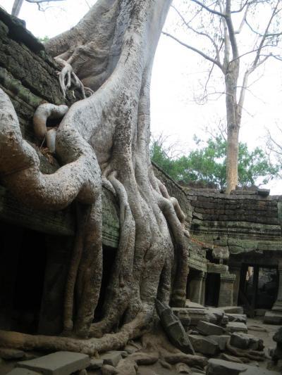 【Wild Cambodia】マレーシア&カンボジア[8] ~壮大にして繊細、アンコール遺跡群を歩く~