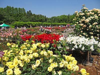 花の調布 神代植物公園 ばら園