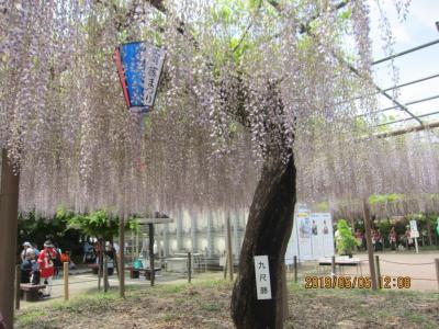 江南 曼陀羅寺の藤まつり