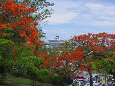4・6歳児連れ、GWは家族でカリブ海クルーズ:マイアミーバハマ編