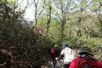 石楠花(しゃくなげ)の東大台ヶ原9km ハイキング中級⁉