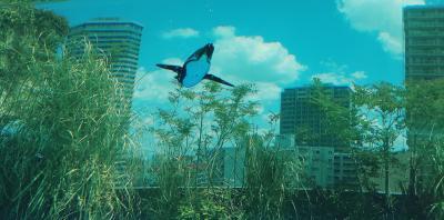久しぶりのサンシャイン水族館!天空のペンギンに感動!!!
