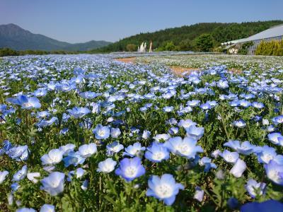 忍野八海 山中湖花の都公園へ日帰りドライブ