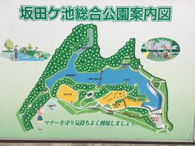 坂田が池と古墳
