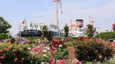 5月なのにまさかの真夏日!暑さに負ケズ、横浜をお散歩♪ランチと薔薇とジャズの休日。