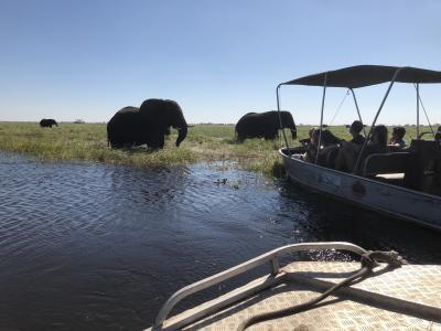 アフリカ 5    ボツワナ チョベ国立公園  ボートクルーズ  風渡る ボートの前に 野生在り